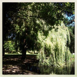 parc cinquante ramonville canal du midi