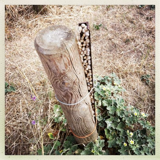 plot en bois avec escargots