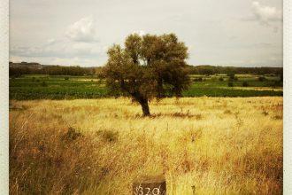 après pont argeliers borne dominiale olivier et vignes