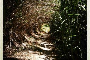 Canal du Midi Étape 9 : de Poilhes jusqu'à Béziers à pied