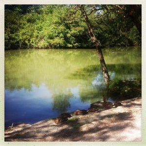 canards canal du midi
