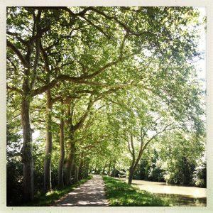 chemin Gardouch canal du midi allées platanes