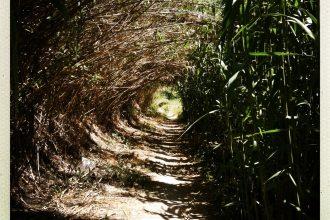 unnel vegetal chemin de halage beziers