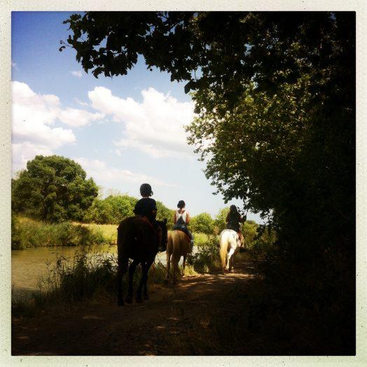 chevaux vias