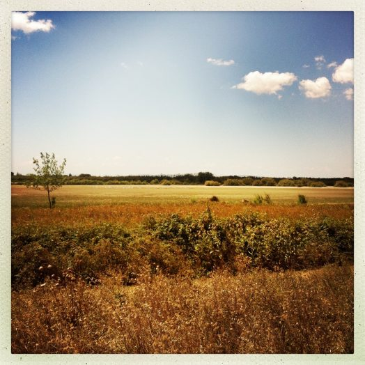 paysage après écluse de portiragnes