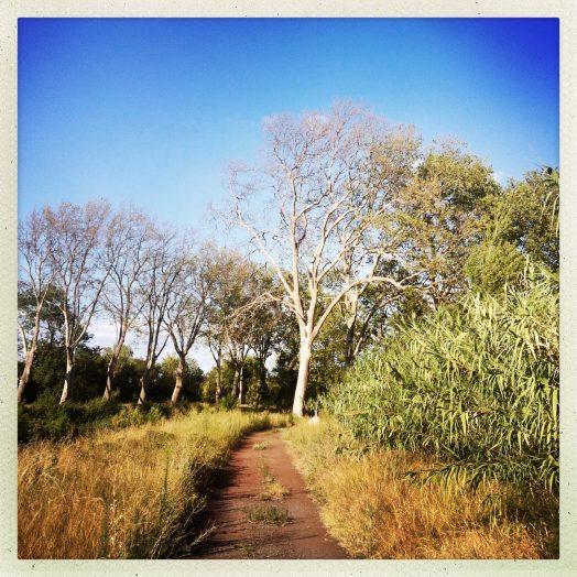chemin solo halage canal du midi