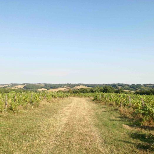 domaine antocyâme la Salvetat-Belmontet