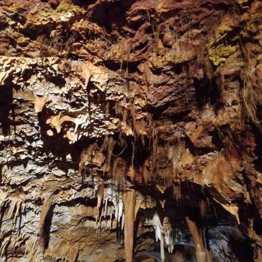 racines dépassant de la pierre calcaire grotte du bosc tarn et garonne