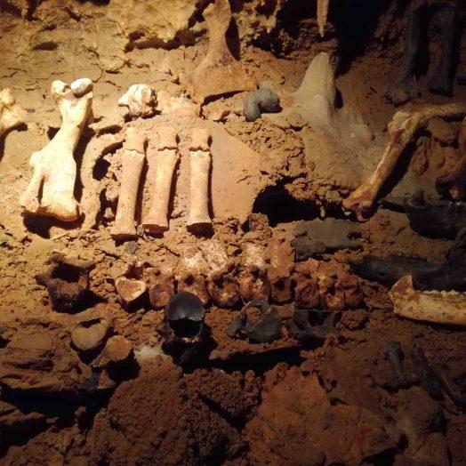 ossements fossiles grotte du bosc tarn et garonne